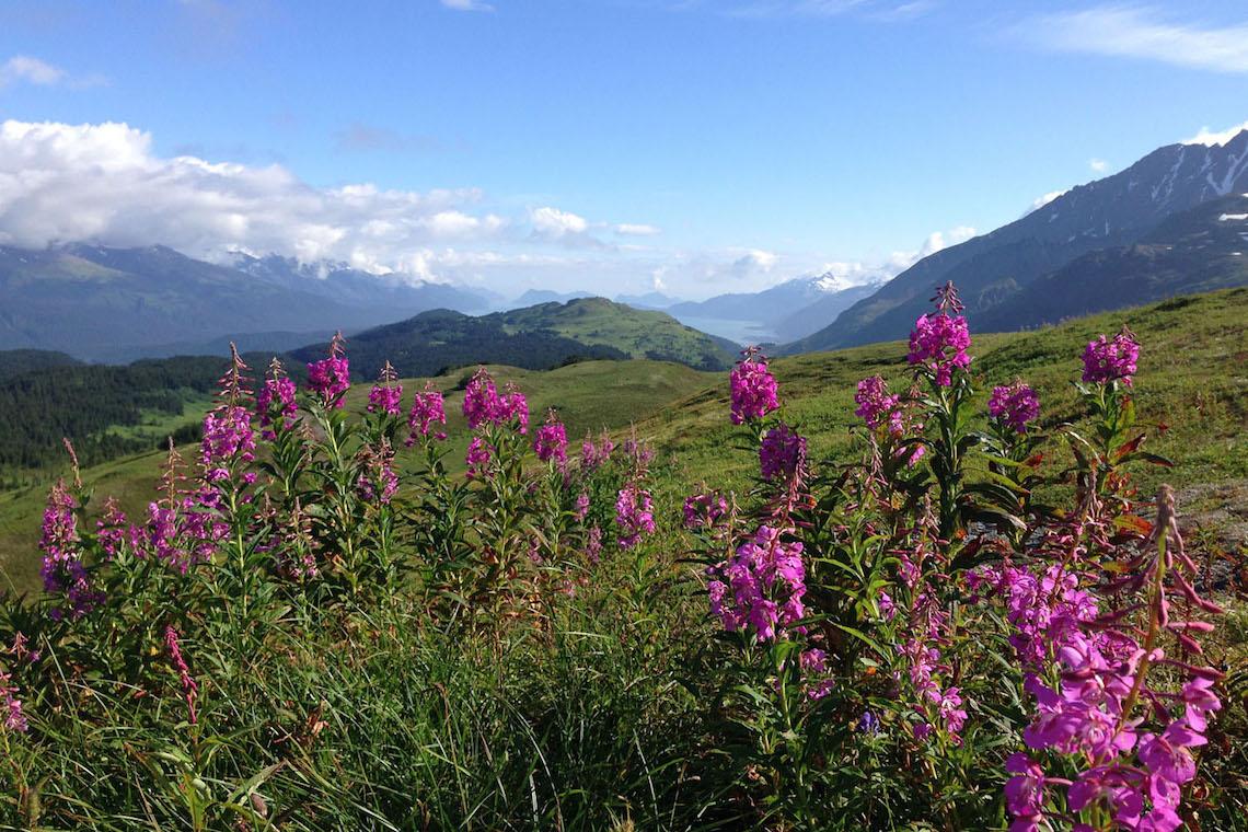 Kenai Alaska_bikepacking_urbancycling_4