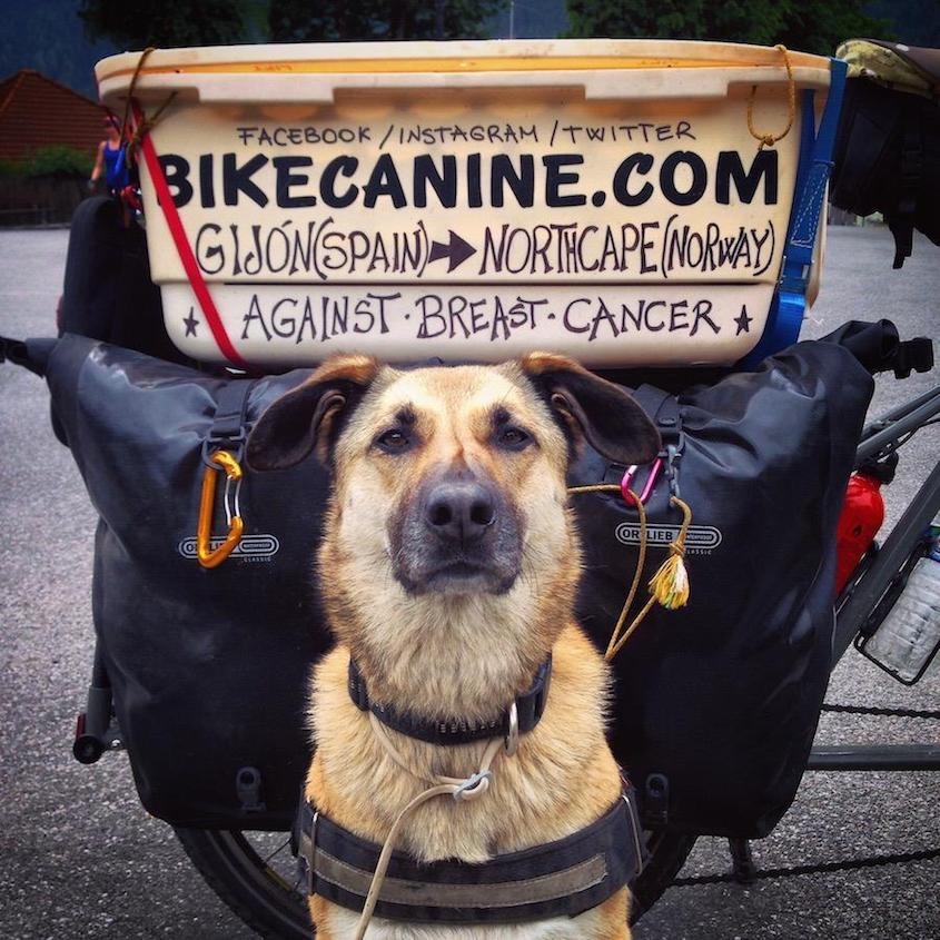 Bikecanine cicloturismo_urbancycling_2