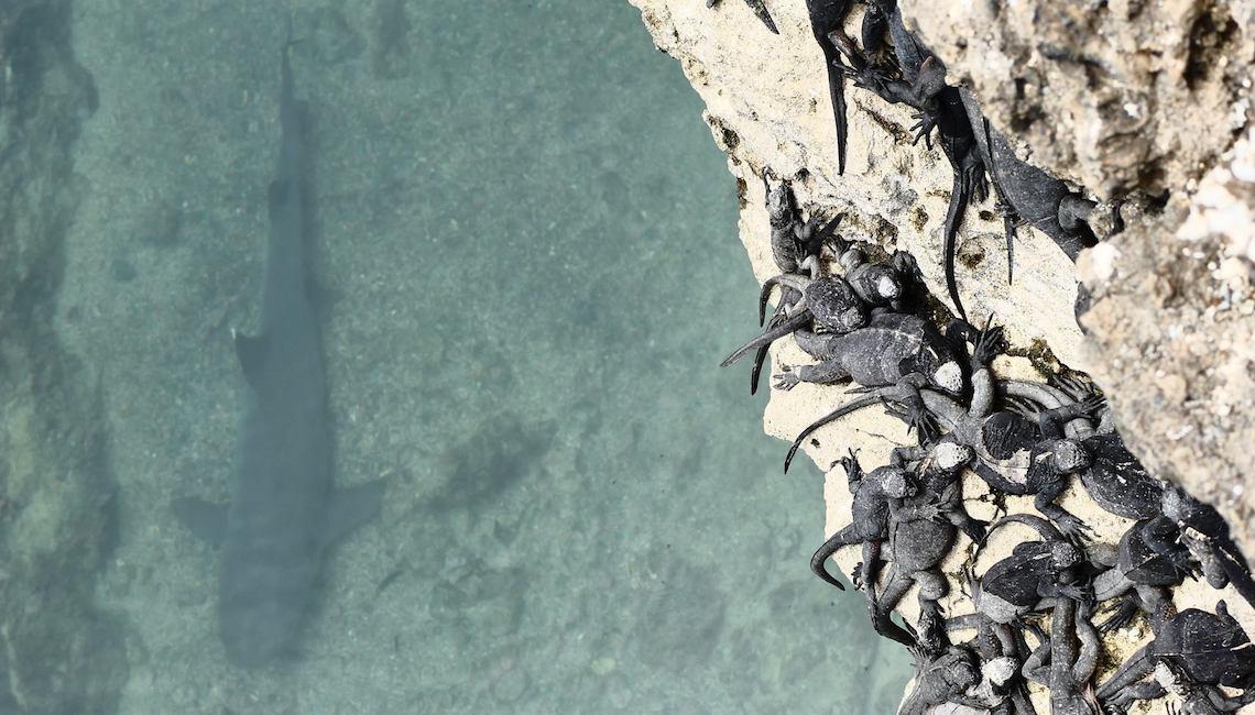 Ocean Traceless Dario_Nardi_urbancycling_12