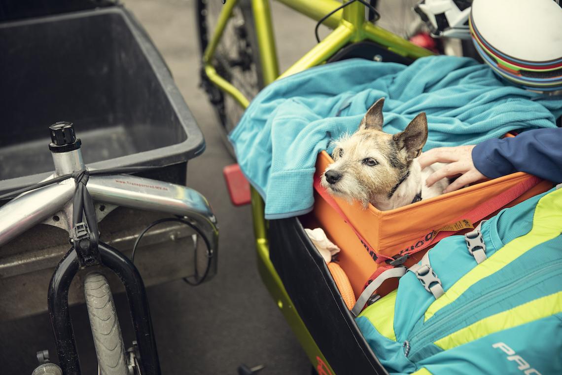 Svajerløb cargo bike racing_7