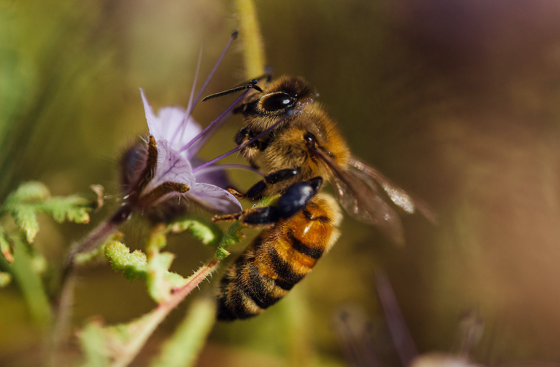 Bee_Wild_Bee_Free_by_Montanus_3